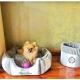 Koš na hračky pro psy MONTE CARLO šedý