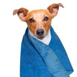 Chladící ručník pro psy DOOGY 66x43cm