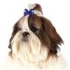 Mašle s gumičkou pro psy SHOW TECH ARGYLE BOWS